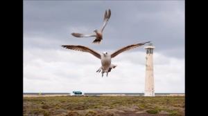 fuerteventura  ptaki