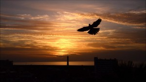 ptak fuerteventura