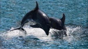 fuerteventura delfiny