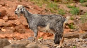 fuerteventura zwierzęta
